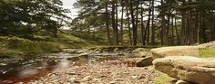 trough bowland - Google Search Places To Visit, Country Roads, Google Search, Water, Plants, Outdoor, Gripe Water, Outdoors, Flora