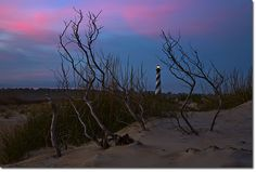 Nature Photography in OBX