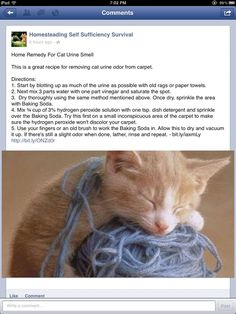 how to get rid of cat urine smell from apartment - Bing Images