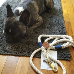 Nautical Dog leashes are perfect for daily use, beach and weddings!
