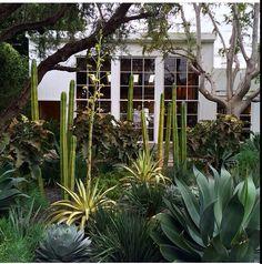 Isabel Marant shop in LA Elysian Landscapes succulents