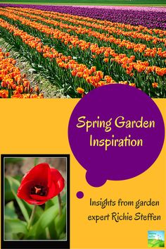 Spring Garden Inspiration.  Ideas for plants and design in the spring garden.