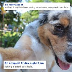 The dog that seems a little caught up in his own interests. | The 17 Creepiest Dogs You Meet On OkCupid