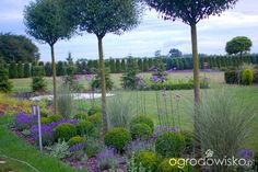DUŻY OGRÓD małej ogrodniczki 1 - strona 555 - Forum ogrodnicze - Ogrodowisko