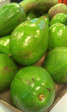 Puertorrican Avocados