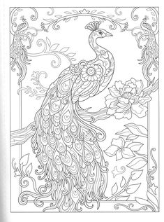 Creative Haven Birds and Blossoms Coloring Book Peacock Coloring Pages, Mandala Coloring Pages, Animal Coloring Pages, Coloring Pages To Print, Colouring Pages, Adult Coloring Pages, Peacock Wall Art, Peacock Painting, Peacock Drawing With Colour