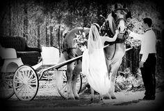 Weddings, Carriage, Bride, Horse, Art