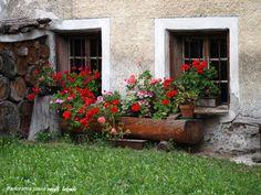 WINDOW PLANTERS Window Planters, Window Boxes, Window Sill, Flowers Free Download, Geranium Flower, Garden Windows, Geraniums, Container Gardening, Flower Pots