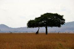 Safari by Emil Kudahi / Сафари. Фото Emil Kudahi