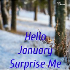 Hello January Surprise Me January Month, Hello January, Cover Pics For Facebook, Birth Flowers, Surprise Me, Wreath Watercolor, Tatty Teddy, Hello Spring, Iphone Skins