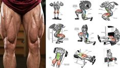 Top 6 Exercises on How to Build Leg Muscle - Chest GYM Workouts Leg Press Workout, Gym Workout Chart, Best Leg Workout, Best Calf Exercises, Quad Exercises, Quad Muscles, Calf Muscles, Leg Workouts For Men, Fun Workouts