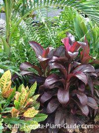 South Florida Garden plants