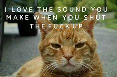 Evil Quotes, Hilarious, Cats, Animals, Gatos, Animales, Animaux, Hilarious Stuff, Animal