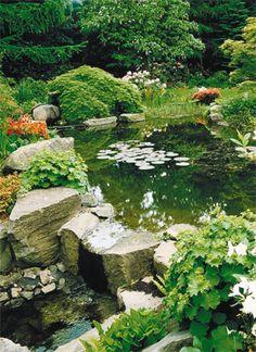 Bassin d'agrément Aquatiss Water Gardens, Ponds, River, Outdoor, Gardens, Kitchen Living, Landscaping, Terrariums, Garden Ponds
