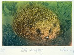 Colour Etching Hedgehog Affordable print by LynnBaileyPrintmaker