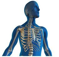 Natural Osteoporosis Prevention