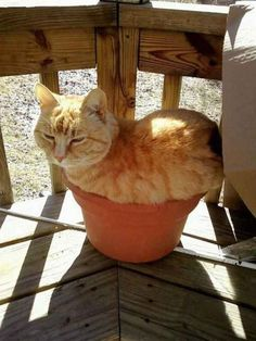 35 Cats Who Prove That No Place Is The Wrong Place For A Cat: Part 2 - BlazePress