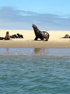 """""""Escape the desert heat of Namibia and venture out into the deep blue sea to go kayaking among seals and dolphins."""" #TheAudleyWay"""