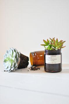 Amber jar to succulent pot, cute!