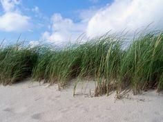 the beach, a beach, any beach!
