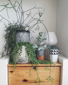 indoor plants from noughticulture