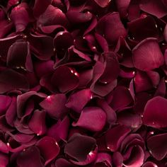 Burgundy Freeze Dried Rose Petals   Petals and Roses