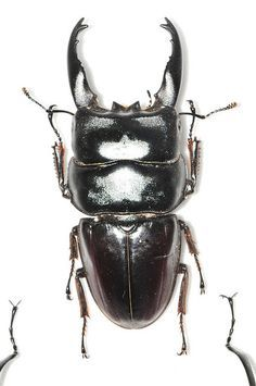Image result for coolest bugs TOP VIEW