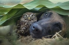 Tanja Brandt is a German photographer who has dedicated her career towards photographing animals and wildlife.   In one of her most recent ...