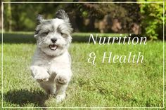 A nutritious balanced diet is essential to keeping your #dog healthy.  There are numerous brands of food on the market, and with dog food companies spending millions on marketing it can be difficult to choose one that is of maximum benefit to your dog #poochDogSpa