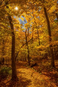 Golden Autumn (Mont-Tremblant, Quebec) by Rony Chidiac / 500px