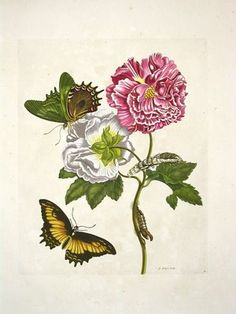 The Vintage Moth: Botanical Drawing (1 of 2)