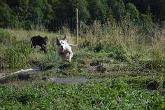 Gårdstunet Hundepensjonat: Vann og flom er dagens to stikkord...også spretne ...
