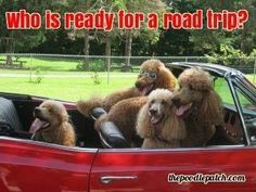 WHO IS READY FOR A ROAD TRIP???