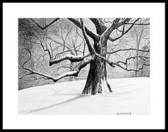The Old Tree Framed Print by Bob Crawford