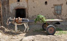 Pull Wagon, Cute Donkey, Animal Protection, Animal Nursery, Donkeys, Wikimedia Commons, Zoo Animals, Cairo, Creative Photography