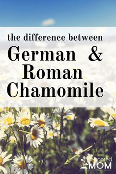 Chances are, if you use Essential Oils as much as we do, you have pondered picking up German & Roman Chamomile. You have probably also asked yourself what the difference is between the tw… Chamomile Tea Benefits, Chamomile Oil, Roman Chamomile, What Are Essential Oils, Essential Oil Uses, Young Living Essential Oils, German Chamomile Essential Oil, Healing Oils, Essential Oil Diffuser Blends