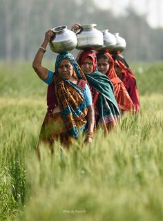 A row of women walk across a field carrying water pots on their head. No running water for them. Agra, India ©V Chatikavanij::
