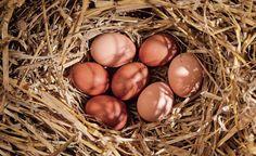 Haben Sie schon einmal über Hühnerhaltung im Garten nachgedacht? Mit einer kleinen gefiederten Schar holen Sie sich ein Stück Landleben in den Garten. Zum Frühstück gibt es dann gesunde, schmackhafte Bio-Eier. Diese 5 Tipps sollten Sie dabei beachten.