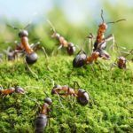 Traiter les fourmis et leur nid dans le jardin Gardens, Ants, Nest, Backyard Farming