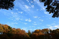 市川市・大町公園自然観察園の紅葉 Autumn Leaves in Omachi Park Ichikawa city,Chiba,Japan