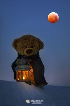 My Teddy Bear, Cute Teddy Bears, Bear Toy, Polar Bear, Bear Wallpaper, Animal Wallpaper, Disney Wallpaper, Tatty Teddy, Felt Animals