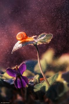 how long do snails sleep ? best images and pictures of snails, and of the slowest animals in the world.