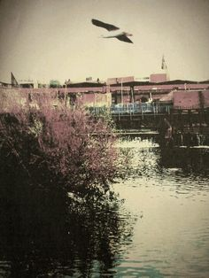 Leicester, photo by Jayne Heatley 2012 (The weir,.by Piggots Sound).
