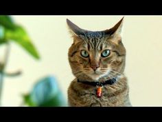 Kitty is Plotting!!!