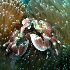 plongée dans le jardin de corail avec atimoo plongée