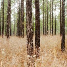 B R O O K E  W H I T E :     P H O T O G R A P H Y  &  V I D E O - Winter Forest, Sardis, MS 2012