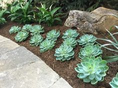 If you want to make Spring & Summer Garden Succulent Plants are the best choice. Succulents multiply easily, and you don't need to visit the nursery again to find other plants for yourself. Succulents are far more tolerant of cold than many people expect. Succulent Landscaping, Landscaping With Rocks, Planting Succulents, Backyard Landscaping, Landscaping Ideas, Backyard Walkway, Growing Succulents, Succulent Arrangements, Amazing Gardens