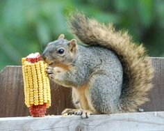 I appreciate the ear, but it's still not going to stop me from eating the seeds out of the bird feeder!