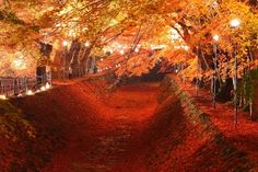 """Just situated right next to Lake Kawaguchi, one of the 5 Fuji Lakes, Momiji Kairo (Walkway of Red Leaves) turns into a magical scene in autumn. The entire """"walkway"""" is dyed in red by the beautiful maple leaves as you walk into a world of enchantment!"""
