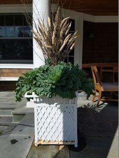 observations of a landscape designer Christmas Urns, Christmas Decorations, Xmas, Primula Denticulata, Eucalyptus Centerpiece, Fall Plants, Porch Plants, Evergreen Landscape, Sweet Woodruff